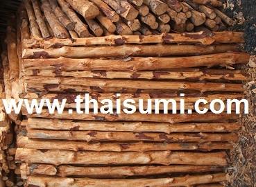 ไม้ยูคา ไม้โกงกาง ไม้ยางพารา ท่อนไม้