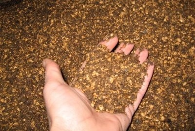 Olive seed husk waste